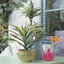 Planta Natural F 350